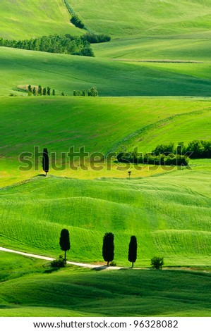 Typical cypress scenery with beautiful green for Tuscany, Italy