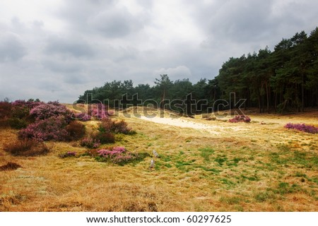 Typical dutch heathland (with typical dutch weather)