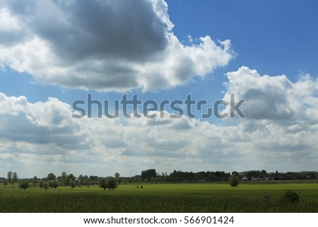 Typical Dutch landscape, beautiful light, blue sky, green grass, tree, horizon, low position #566901424