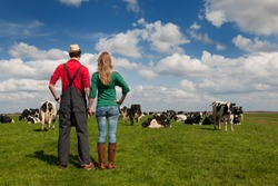 Typical Dutch landscape with farmers couple black and white cows in the meadows