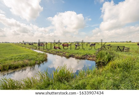 Typical Dutch polder landscape with grazing cows in the meadow and clouds reflected in the mirror smooth water surface of the ditch. The photo was taken near the village of Langerak, South Holland. Foto stock ©