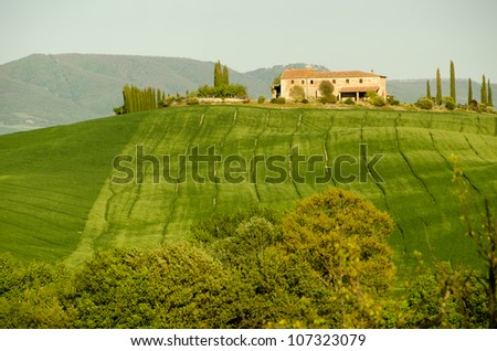 Typical farmhouse building in Tuscany in middle of vineyard in spring, Italy