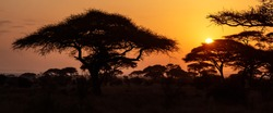 Typical iconic african sunset with acacia tree in Serengeti, Tanzania. Banner wide format