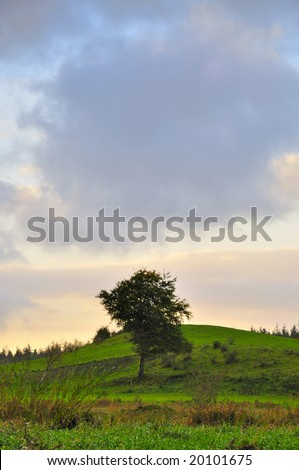 typical Irish landscape scene from Co.Westmeath, Ireland, showing,grassland,trees and sky
