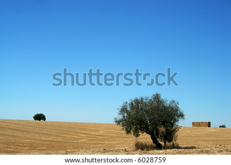 typical landscape from alentejo portugal