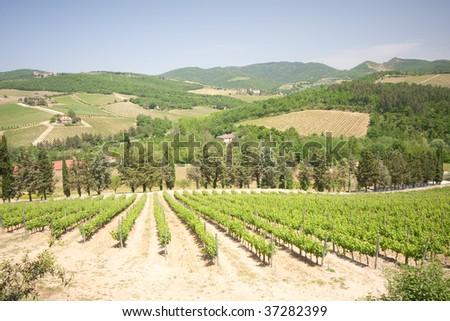 typical landscape in Italian region Tuscany
