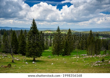 typical landscape in the swiss jura with wildflowers and forest near Mont Tendre Photo stock ©