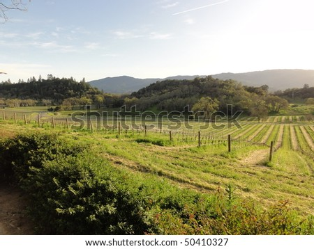 Typical Napa Valley vineyard view at sunset
