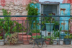 Typical old building window with plants and a cat walking in front, Zakynthos island, Greece