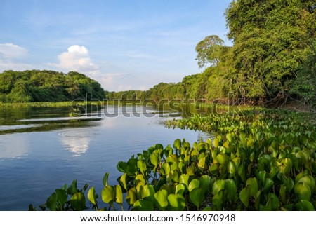 Photo of  Typical Pantanal river scenery in afternoon light,  sky reflected on water, Pantanal Wetlands, Mato Grosso, Brazil