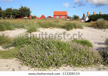 Typical red Scandinavian house on coastline in Snogebaek, early morning and violet flowers on dunes -  Bornholm, Denmark