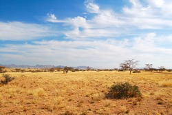 Typical Savannah in Namibia