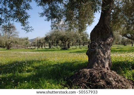 Typical spring rural landscape in the sicilian hinterland. Sicily, Ragusa, Italy.