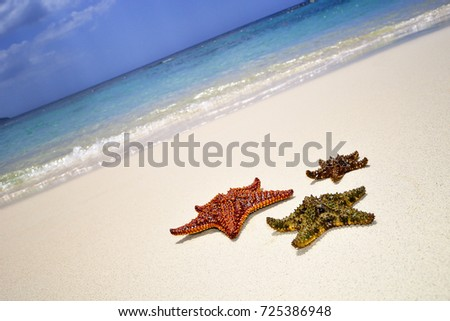 Typical summer season theme. Detail of starfish in sand. Sunny day at Montego bay beach, Jamaica