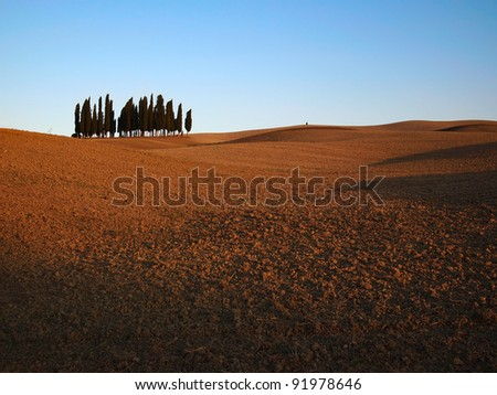Typical Tuscany landscape with a small bunch of cypresses and rolling hills in autumn in Val d'Orcia, Italy.