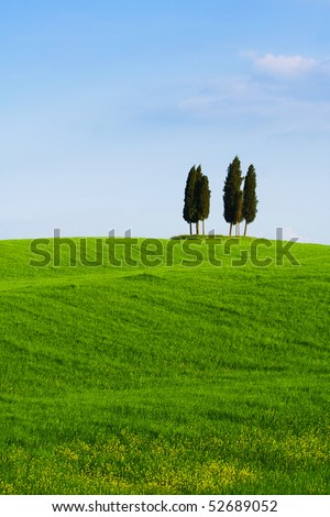 Typical Tuscany (Val d' Orcia) landscape with blue sky, rolled hills and four cypress.