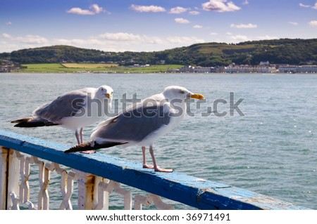 Typical Welsh seaside resort of Llandudno with seagulls in foreground