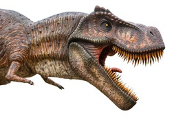 Tyrannosaurus Rex or T-Rex is a carnivorous genus of Coelurosaurian Theropod dinosaur, lived in the Cretaceous period, Tyrannosaurus Rex or T-Rex isolated on white background with a clipping path