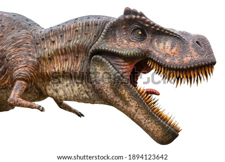 Tyrannosaurus Rex or T-Rex is a carnivorous genus of Coelurosaurian Theropod dinosaur, lived in the Cretaceous period, Tyrannosaurus Rex or T-Rex isolated on white background with a clipping path Сток-фото ©