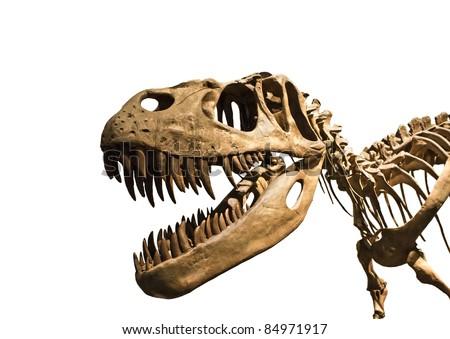 Tyrannosaurus Rex skeleton - stock photo