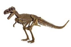 Tyrannosaurus Rex Skeleton isolated on white