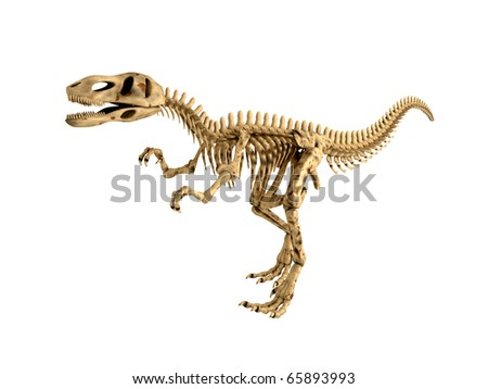 Tyrannosaurus Rex Skeleton isolated on white