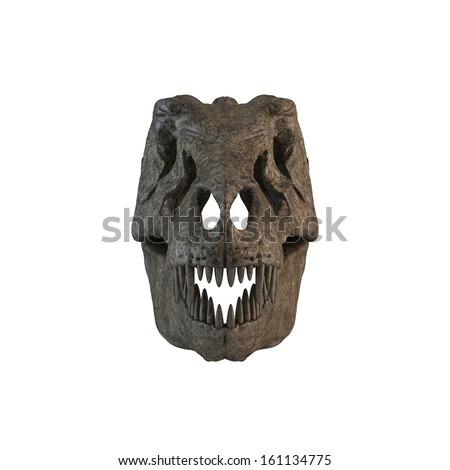 Velociraptor |Velociraptor Skull Front