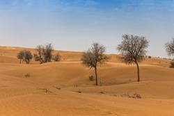 UAE Desert on a bright sunny day