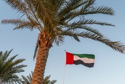 UAE Flag flying. Tropical Palm tree background. Holiday, vacation, tourism in Abu Dhabi, Dubai, Emirates, Etihad concepts. Green, black red flag in the wind on flagpole. Flags of the world.