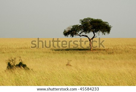 Ugandan Landscape - stock photo