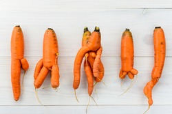 Ugly carrot on a wooden background. Ugly vegetables concept. Horizontal orientation, top view.
