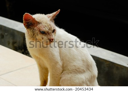 Ugly cat with skin disease and different colored eyes
