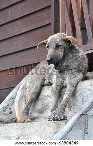 Ugly Dog Sit Thailand