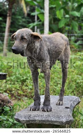 Ugly Dog Stand