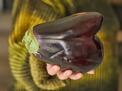 Ugly eggplant in the shape of a heart holds on his hand. Funny, abnormal vegetable or food waste concept.