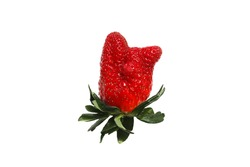 Ugly organic strawberry isolated on white background. Trendy ugly food. Funny, unnormal fruit concept.