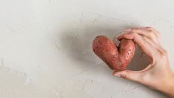 Ugly potato in the heart shape in hands on a gray concrete background. Funny, unnormal vegetable or food waste concept.