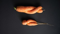 Ugly vegetables. Two odd ugly form carrot on  black background.