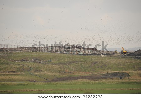 Uk landfill site in operation showing machinery and a flock of scavenging birds