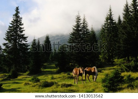 Ukraine, Gorgany Mountains - bay brown horses with a white mane on the pastures Ruszczyna #1413013562