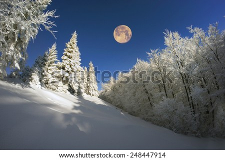 Ukrainian Carpathians snowy forest in the afternoon, and at sunrise and sunset is beautiful and attractive. Slender fir and lush beech shackled by frost and rime, the sun\'s rays create beauty