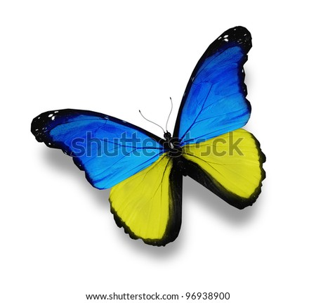 Ukrainian flag butterfly, isolated on white