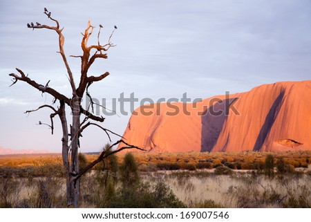 Uluru Ayers Rock Aboriginal sacred place UNESO world heritage Sunrise sun is color painting red sandstone rock