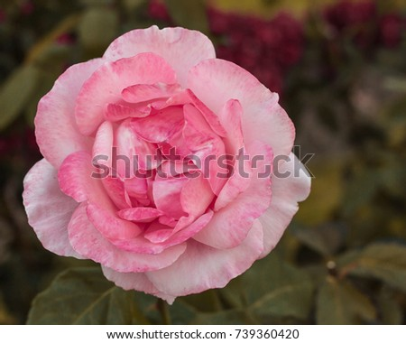 Shutterstock Uma flor, one flower