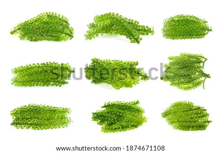 Umi-budou, grapes seaweed or green caviar isolated on white background Zdjęcia stock ©