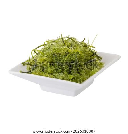 Umi-budou, Seaweed , Healthy sea food. Oval sea grapes seaweed. Healthy Food, Close up Green Caviar on white background. Zdjęcia stock ©
