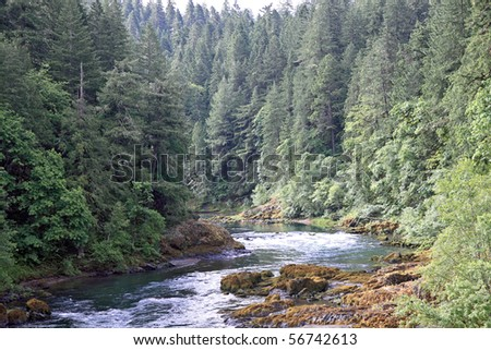 Umpqua river meanders between evergreen trees and mossy rocks in cascade mountains of Oregon
