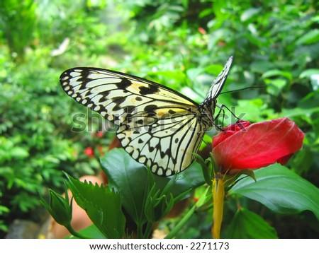 Una farfalla resting/feeding su un fiore rosso. - stock photo