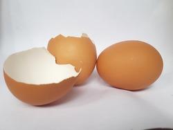 unbroken chicken shells and eggs