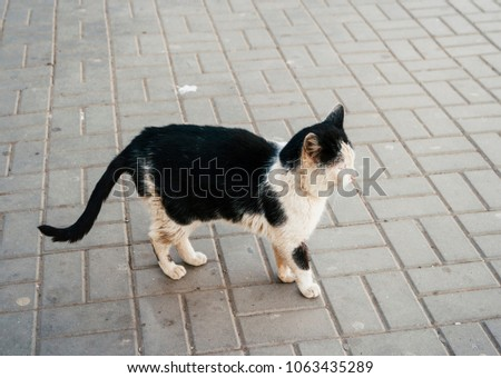 Unclean black and white cat in the street. Roofless pet outdoors. Vagrant cat. Dirty animal in the street looking away.
